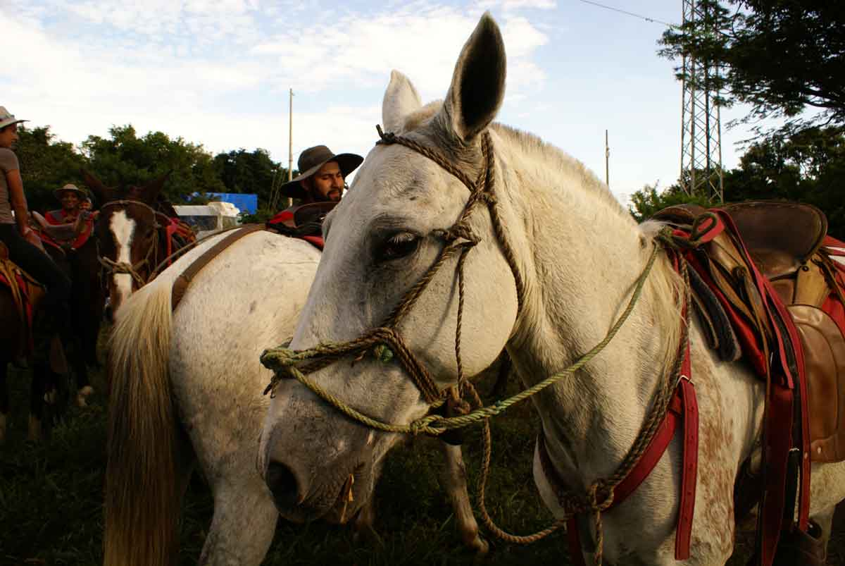 Beautiful white horse that I rode on during the Adventure Tour in Tamarindo